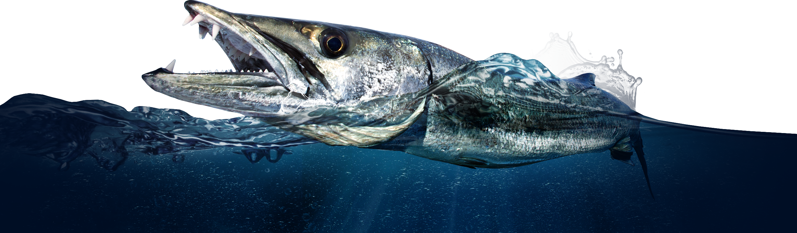 A Barracuda on the homepage of the Tackle Crafters Fish Apparel and equipment store
