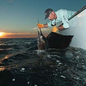 Atlantic-Sailfish