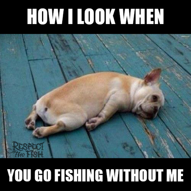10 best fishing memes of all time tackle crafters for What is the best time to go fishing